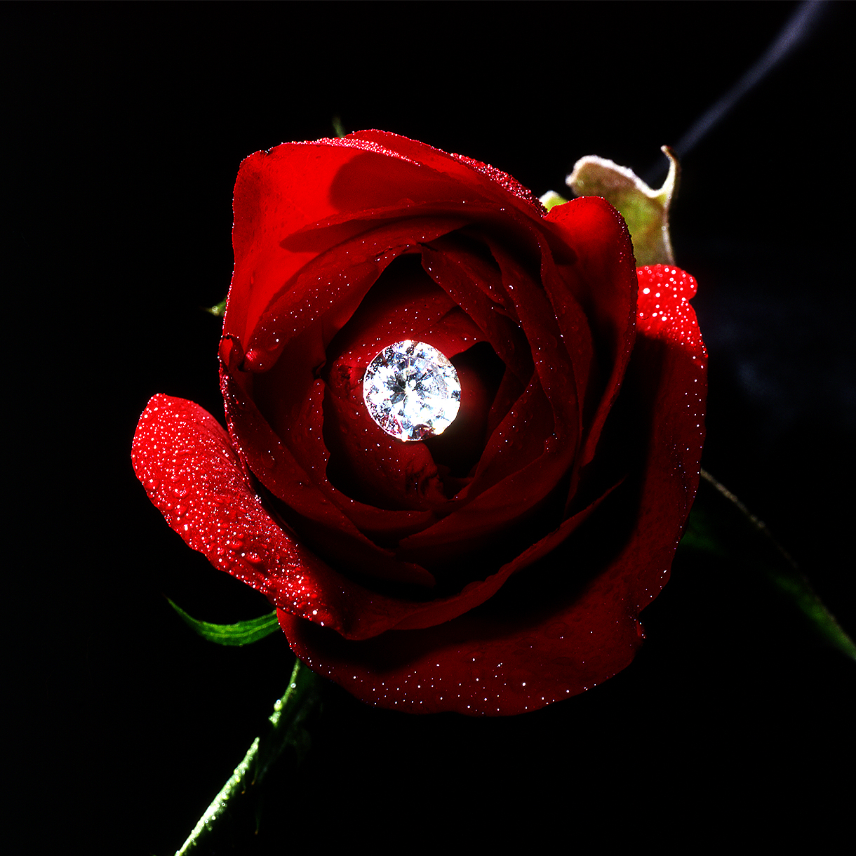 Rose Diamant